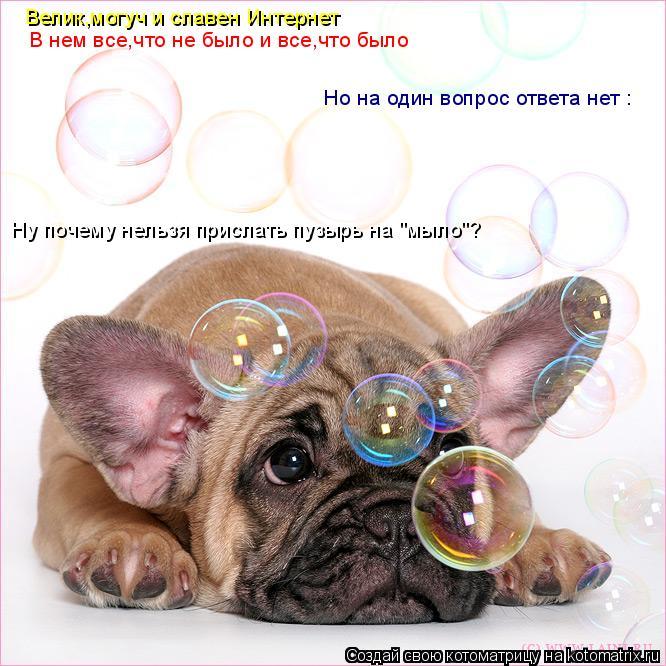 """Котоматрица: Велик,могуч и славен Интернет  В нем все,что не было и все,что было  Но на один вопрос ответа нет :  Ну почему нельзя прислать пузырь на """"мыло""""?"""