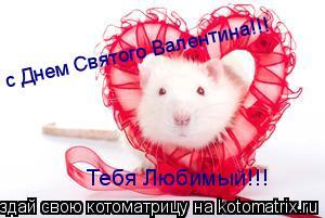 Котоматрица: с Днем Святого Валентина!!! Тебя Любимый!!!