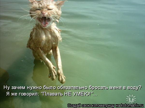 """Котоматрица: Ну зачем нужно было обязательно бросать меня в воду? Я же говорил: """"Плавать НЕ УМЕЮ!""""..."""