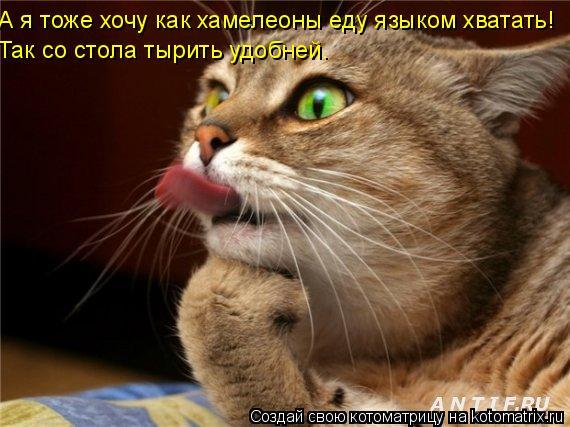 Котоматрица: А я тоже хочу как хамелеоны еду языком хватать! Так со стола тырить удобней.