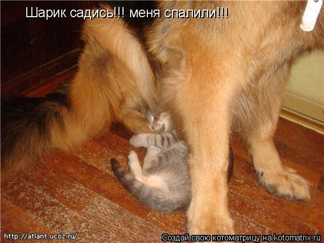 Котоматрица: Шарик садись!!! меня спалили!!!