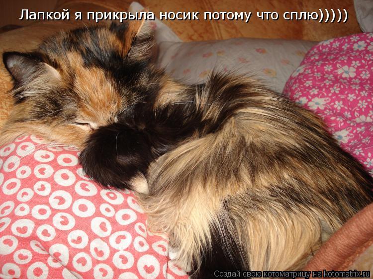 Котоматрица: Лапкой я прикрыла носик потому что сплю)))))