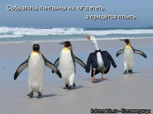 Котоматрица: Собрались пингвины на юг лететь,  а придётся плыть