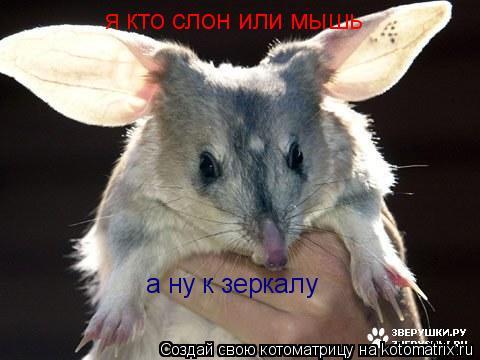 Котоматрица: я кто слон или мышь а ну к зеркалу
