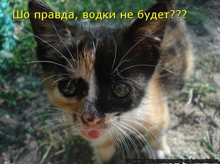 Котоматрица: Шо правда, водки не будет???