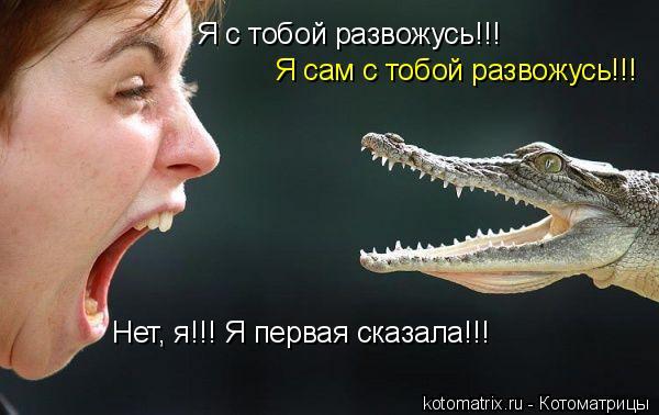 Котоматрица: Я с тобой развожусь!!! Я сам с тобой развожусь!!! Нет, я!!! Я первая сказала!!!