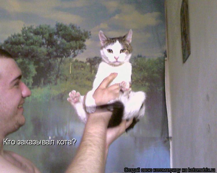 Котоматрица: Кто заказывал кота?