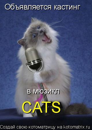 Котоматрица: Объявляется кастинг в мюзикл CATS