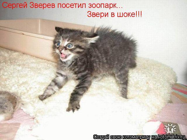 Котоматрица: Сергей Зверев посетил зоопарк... Звери в шоке!!!