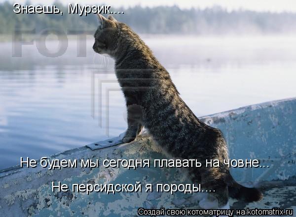 Котоматрица: Знаешь, Мурзик.... Не будем мы сегодня плавать на човне... Не персидской я породы....
