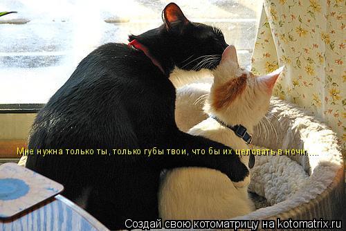 Котоматрица: Мне нужна только ты, только губы твои, что бы их целовать в ночи.....