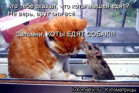 Котоматрица: Кто тебе сказал, что коты мышей едят? Не верь, врут они всё... Запомни, КОТЫ ЕДЯТ СОБАК!!!