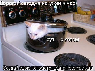 Котоматрица: Дорогой,сегодня на ужин у нас суп....с котом