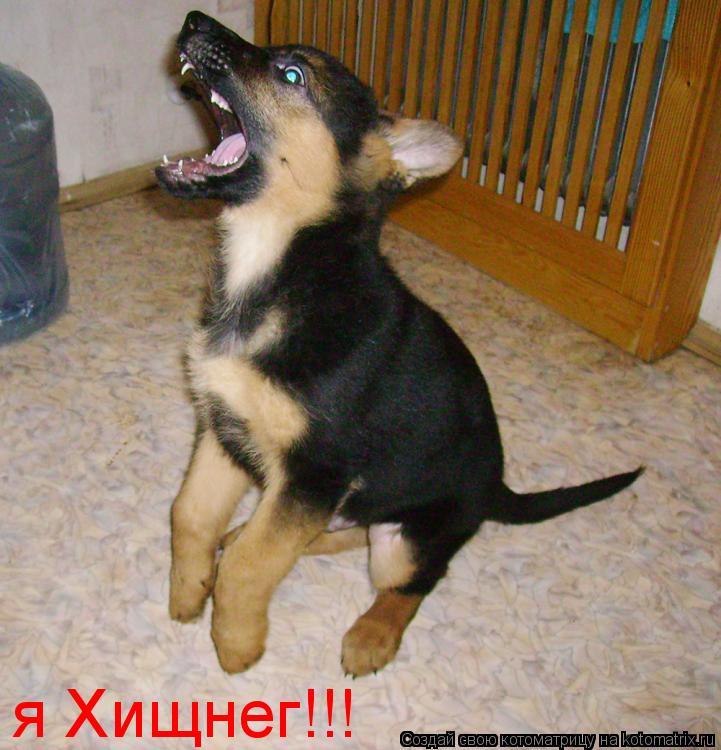 Котоматрица: я Хищнег!!!