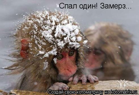 Котоматрица: Спал один! Замерз...