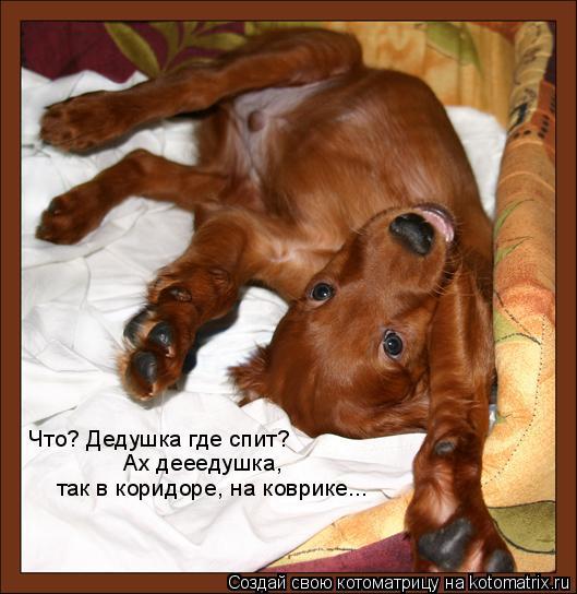 Котоматрица: Что? Дедушка где спит? Ах дееедушка,  так в коридоре, на коврике...