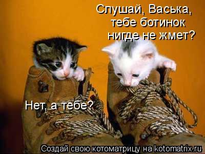 Котоматрица: Слушай, Васька,  тебе ботинок  нигде не жмет? Нет, а тебе?