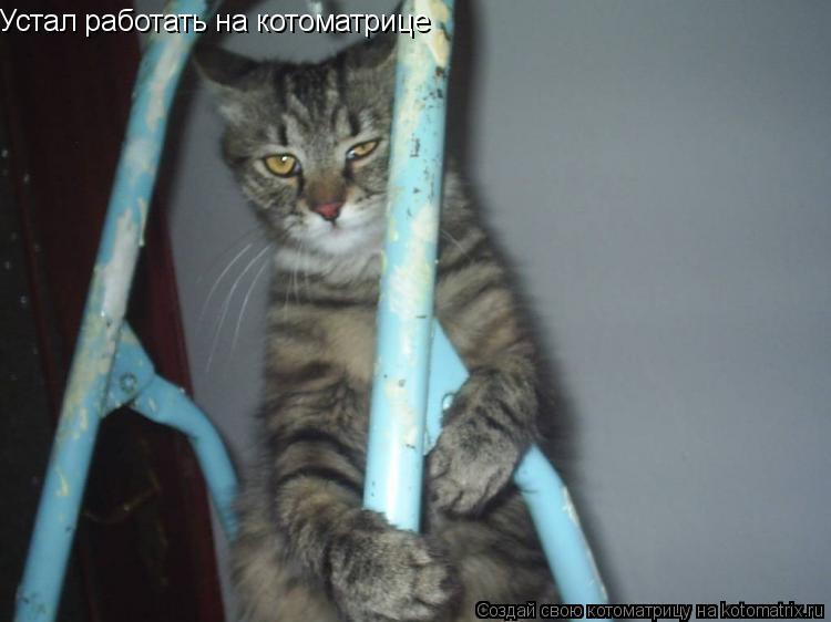 Котоматрица: Устал работать на котоматрице