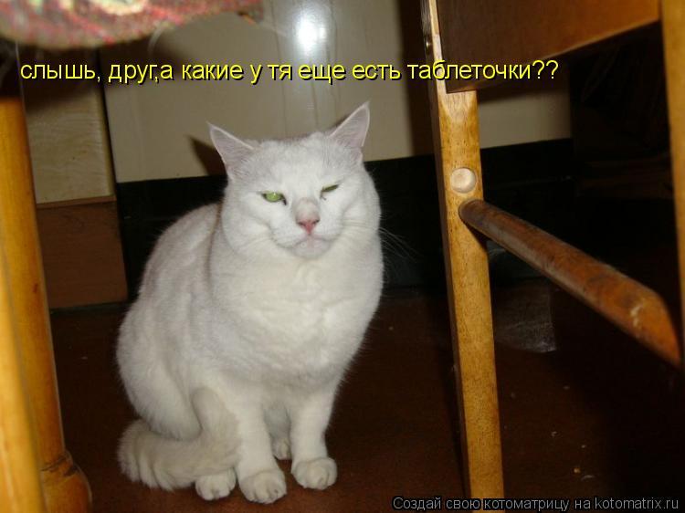 Котоматрица: слышь, друг,а какие у тя еще есть таблеточки??