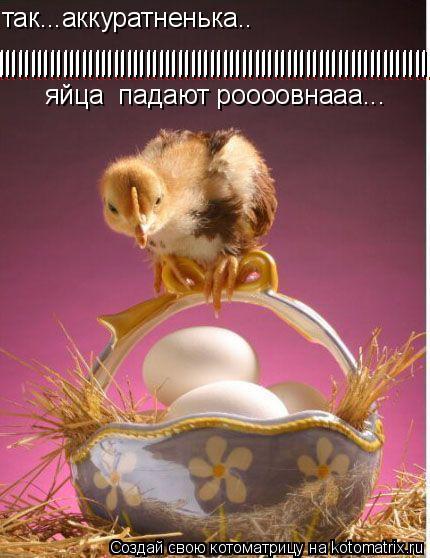 Котоматрица: так...аккуратненька.. яйца  падают роооовнааа... ||||||||||||||||||||||||||||||||||||||||||||||||||||||||||||||||||||||||||||||||| |||||||||||||||||||