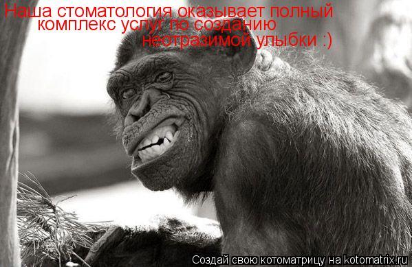 Котоматрица: Наша стоматология оказывает полный комплекс услуг по созданию неотразимой улыбки :)