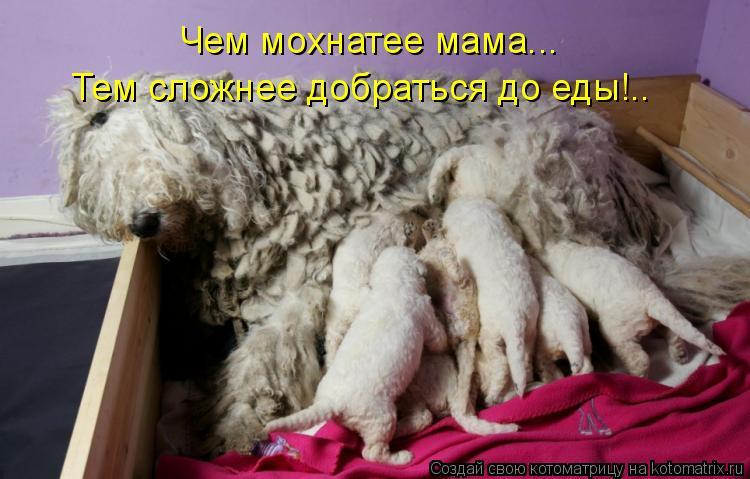 Котоматрица: Чем мохнатее мама... Тем сложнее добраться до еды!..