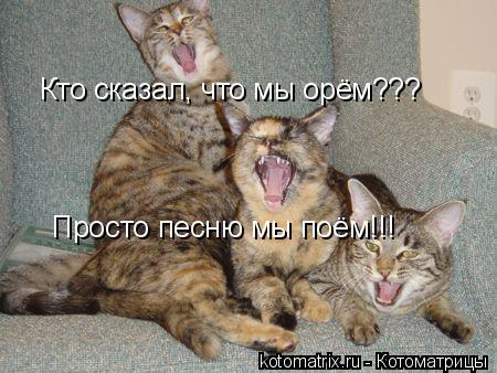 Котоматрица: Кто сказал, что мы орём??? Просто песню мы поём!!!