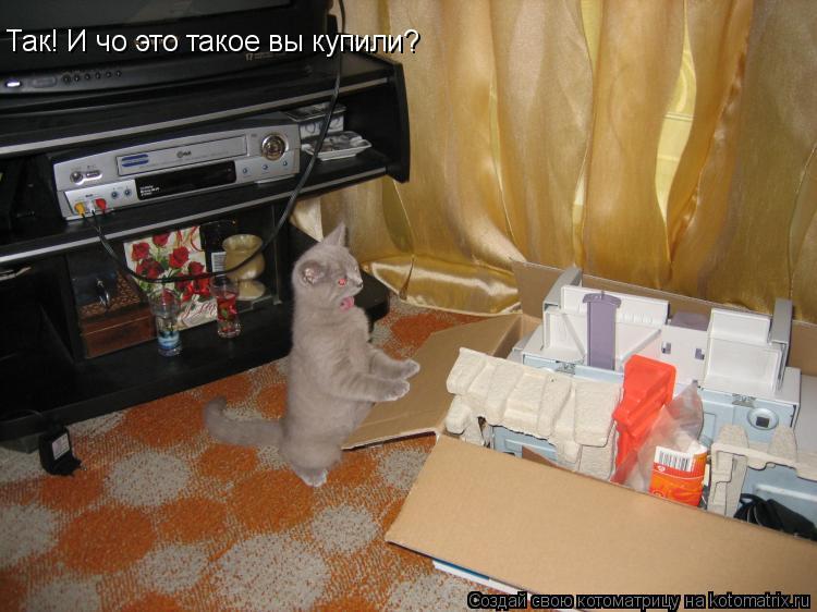 Котоматрица: Так! И чо это такое вы купили?
