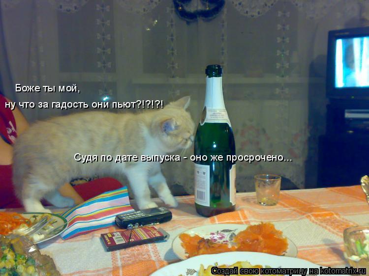 Котоматрица: Боже ты мой,  ну что за гадость они пьют?!?!?! Судя по дате выпуска - оно же просрочено...