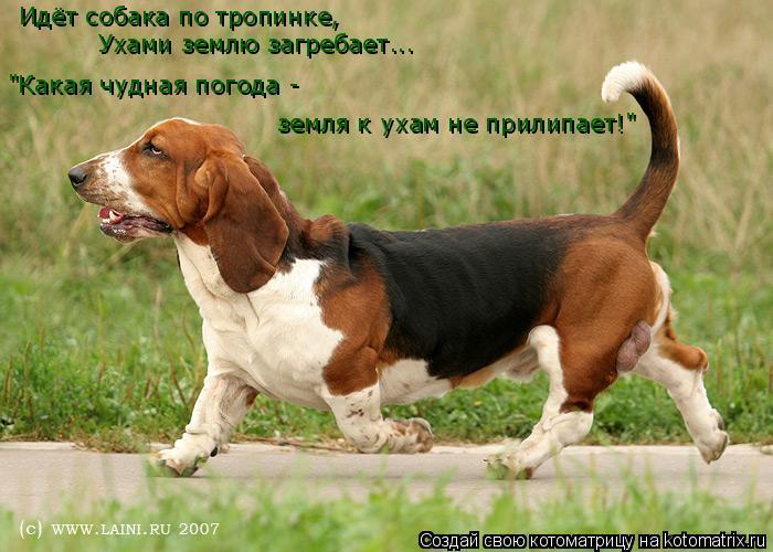 Если собака бежит рядом примета