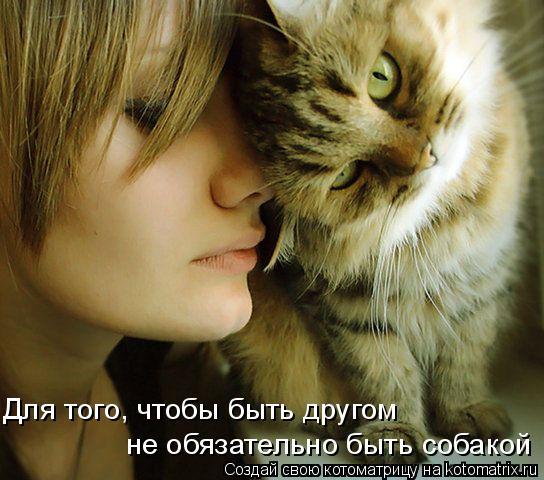 Котоматрица: Для того, чтобы быть другом  не обязательно быть собакой