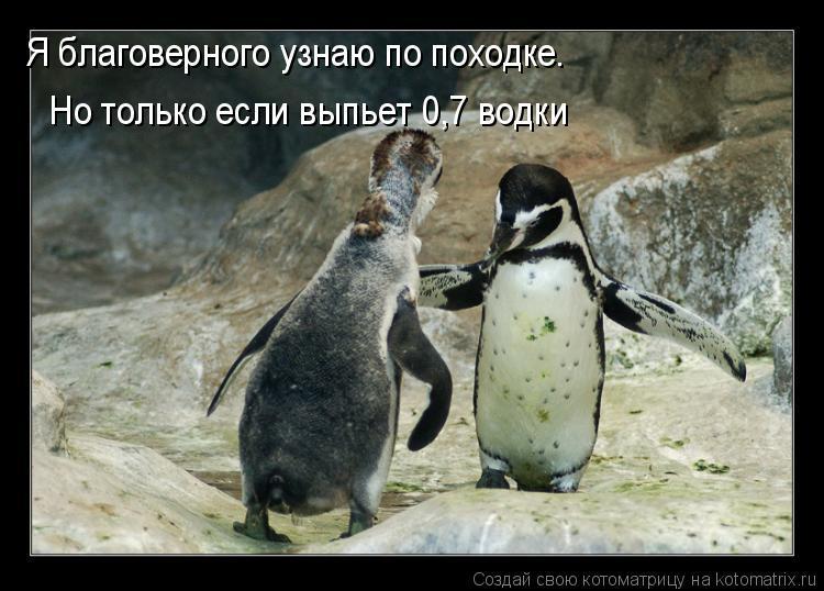 Котоматрица: Я благоверного узнаю по походке. Но только если выпьет 0,7 водки