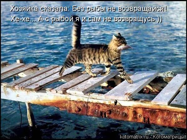 Котоматрица: Хозяйка сказала: Без рыбы не возвращайся! Хе-хе... А с рыбой я и сам не возвращусь ))