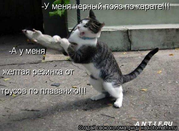 Котоматрица: -У меня черный пояс по карате!!! -А у меня желтая резинка от  трусов по плаванию!!!