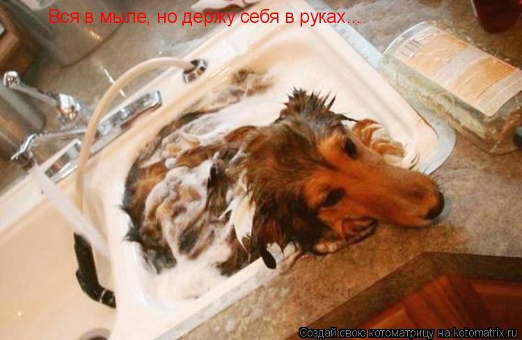 Котоматрица: Вся в мыле, но держу себя в руках...