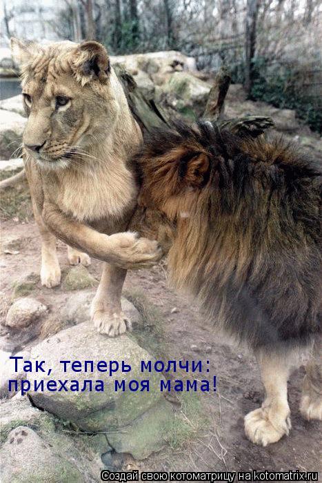 Котоматрица: Так, теперь молчи: приехала моя мама!
