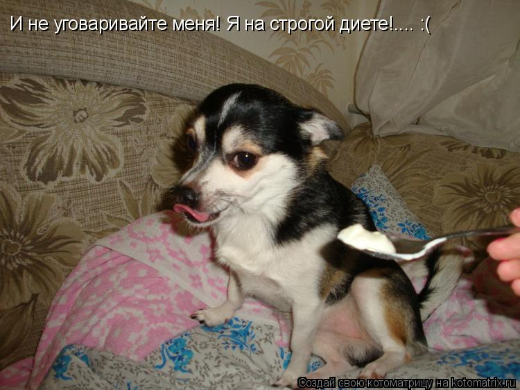 Котоматрица: И не уговаривайте меня! Я на строгой диете!.... :(