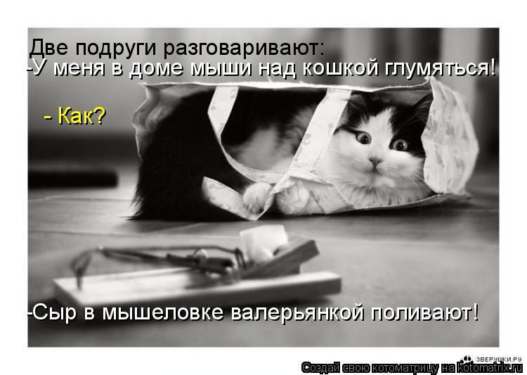 Котоматрица: Две подруги разговаривают:  -У меня в доме мыши над кошкой глумяться!  - Как? -Сыр в мышеловке валерьянкой поливают!
