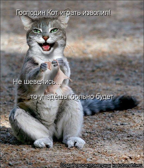 Котоматрица: Господин Кот играть изволил! Не шевелись...  то упадёшь..больно будет