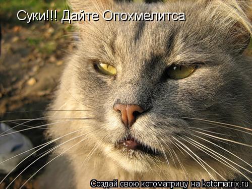 Котоматрица: Суки!!! Дайте Опохмелитса