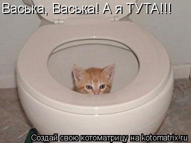 Котоматрица: Васька, Васька! А я ТУТА!!!