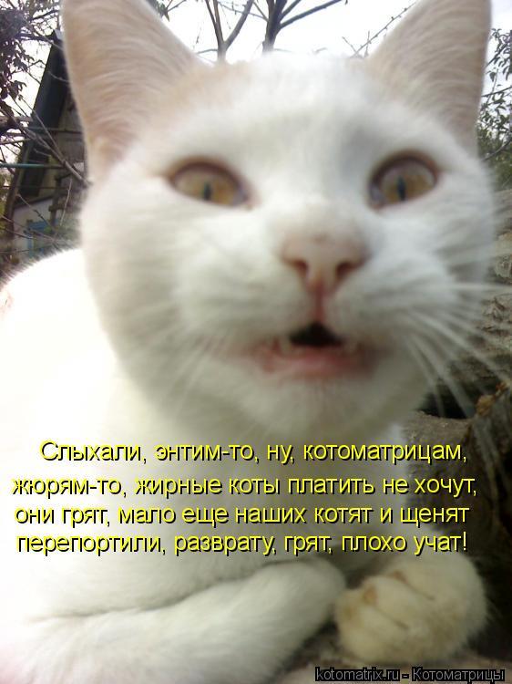 Котоматрица: Слыхали, энтим-то, ну, котоматрицам, жюрям-то, жирные коты платить не хочут,  они грят, мало еще наших котят и щенят  перепортили, разврату, гря