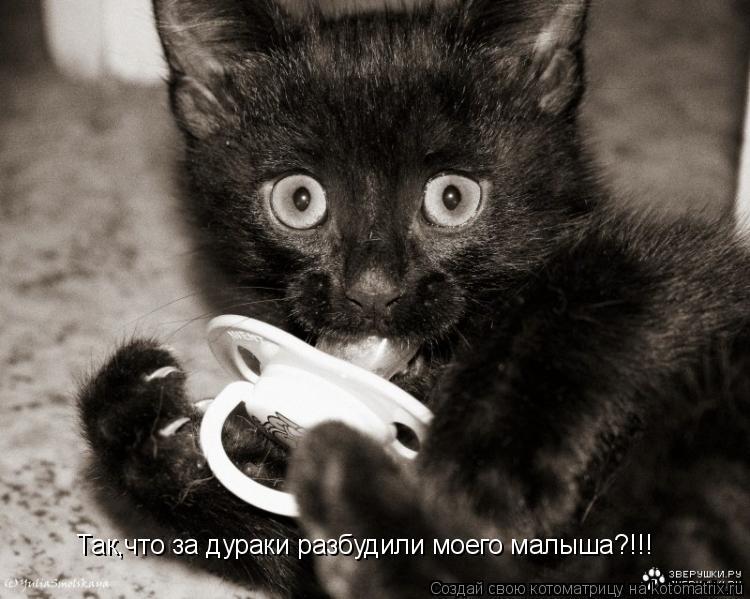 Котоматрица: Так,что за дураки разбудили моего малыша?!!!