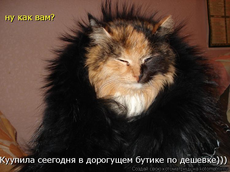 Котоматрица: Куупила сеегодня в дорогущем бутике по дешевке))) ну как вам?