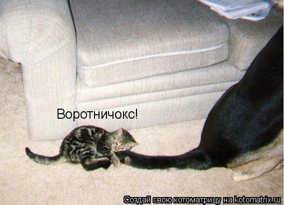 Котоматрица: Воротничокс!