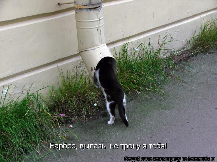 Котоматрица: Барбос, вылазь, не трону я тебя!