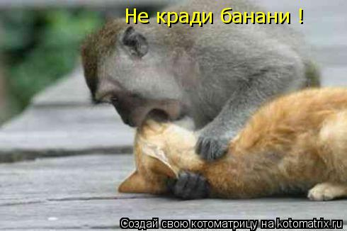 Котоматрица: Не кради банани !
