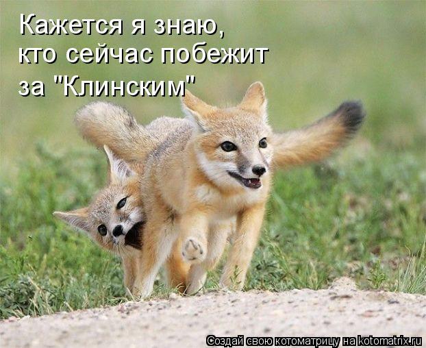 """Котоматрица: Кажется я знаю, кто сейчас побежит за """"Клинским"""""""