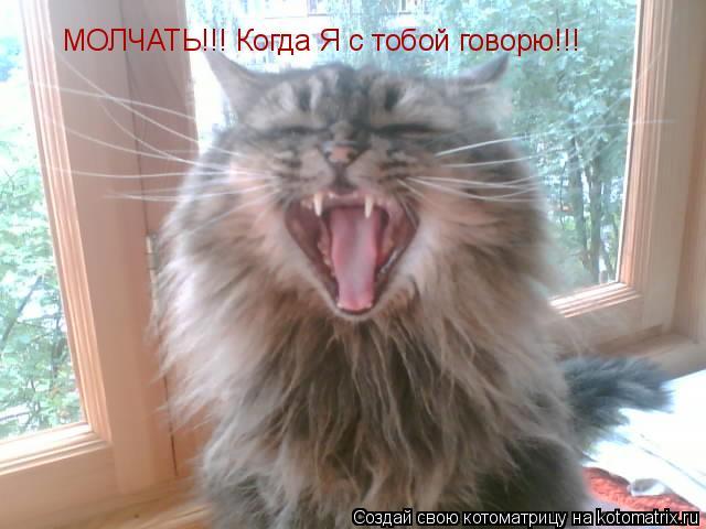 Котоматрица: МОЛЧАТЬ!!! Когда Я с тобой говорю!!!