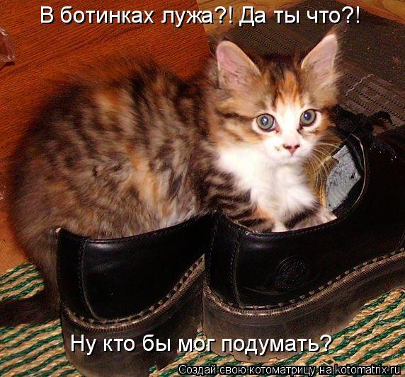Котоматрица: Ну кто бы мог подумать? В ботинках лужа?! Да ты что?!